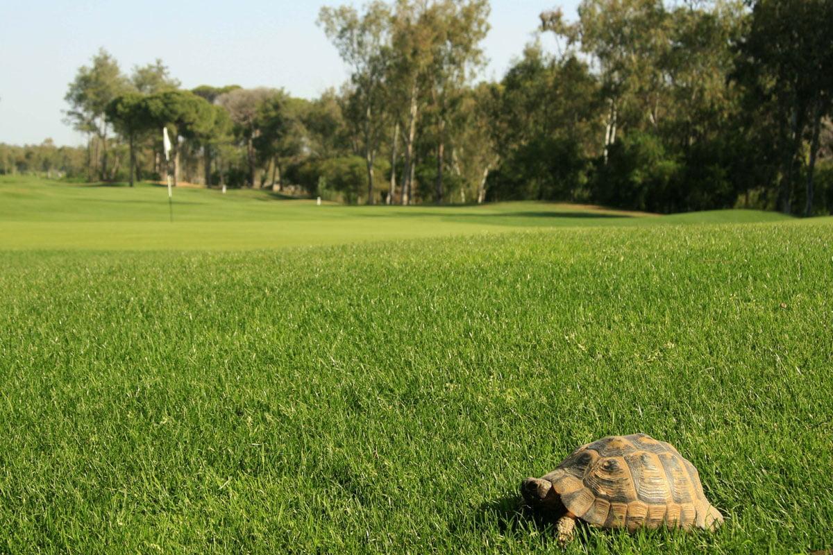 Antalya Golf Club Sultan Pasha Course Golfbutikken golfbane